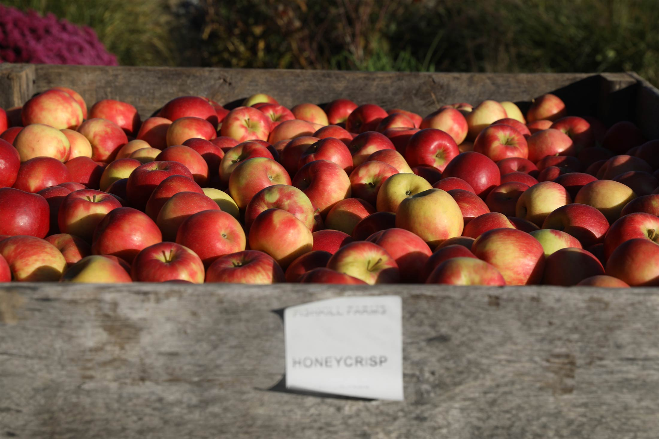 bloomberg.com - Deena Shanker - The Curse of the Honeycrisp Apple