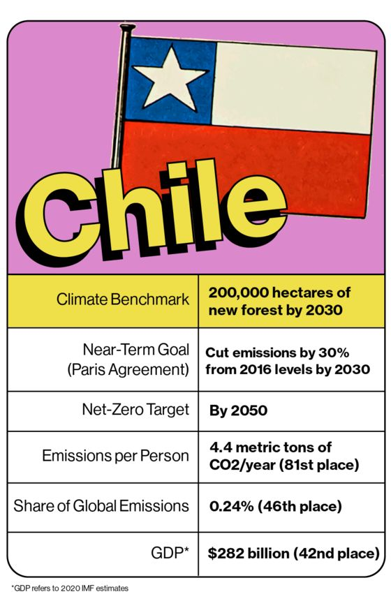 To Zero Out Emissions, Chile Must Rethink Its Forestry Industry