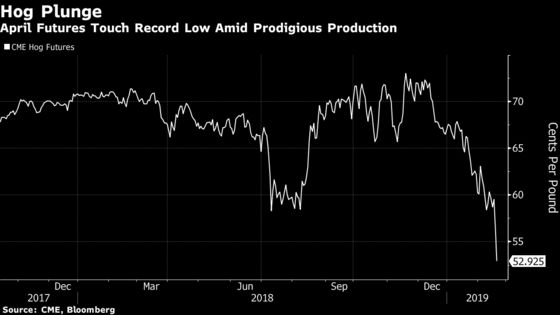 Hog Futures Crash on Huge Supplies as Cold Boosts Cattle