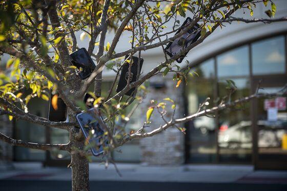 Amazon Drivers Say Smartphones-In-Trees Scheme Has Been Thwarted