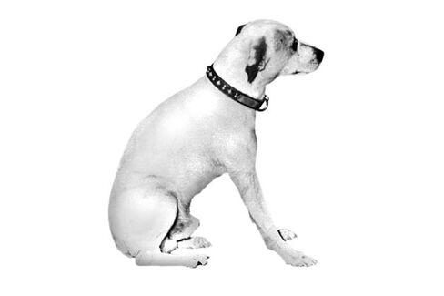 HMV's Brand, Including Dog Mascot Nipper, May Live On