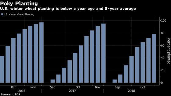 Kansas Farmers May Plant Less Wheat Than Estimated Due to Heavy Rains