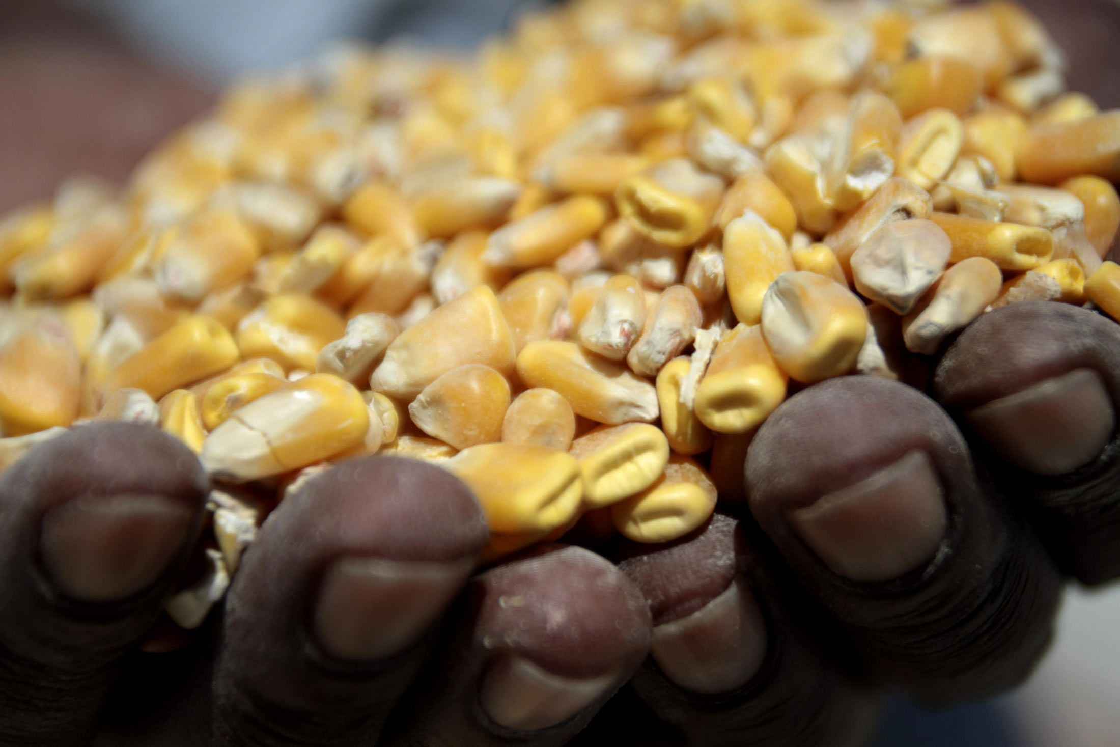 South Africa Raises Forecast for Record 2017 Corn Harvest