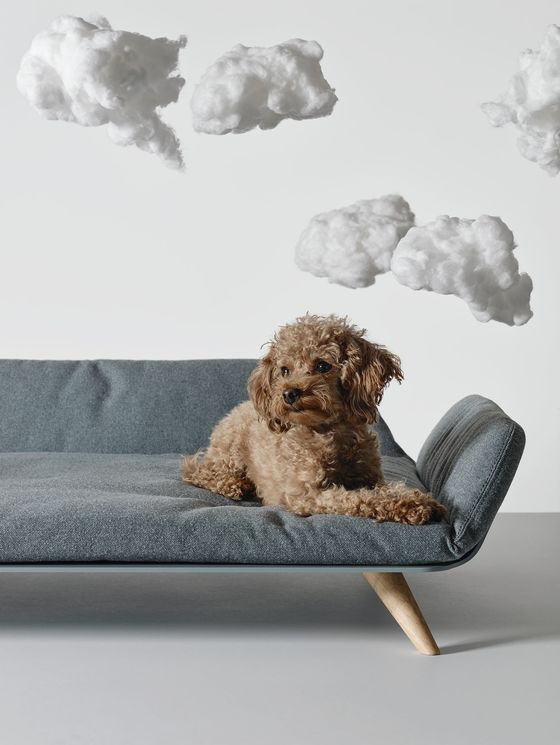 The One Time You Can Justify Spending $1,045 on a Dog Bed