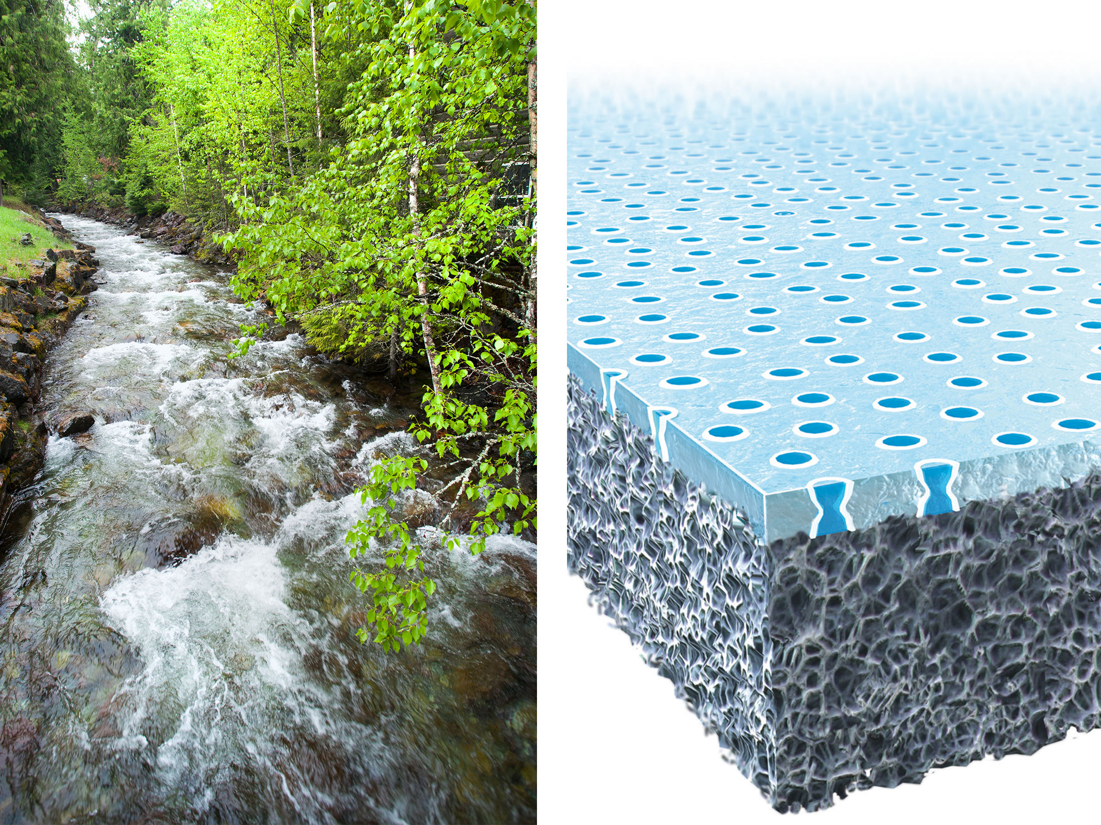 Nature S Water Filter Biomimicry