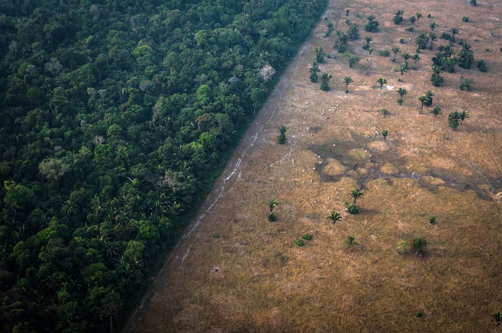New Rainforest Projects Halted Brazil S Development Bank Says