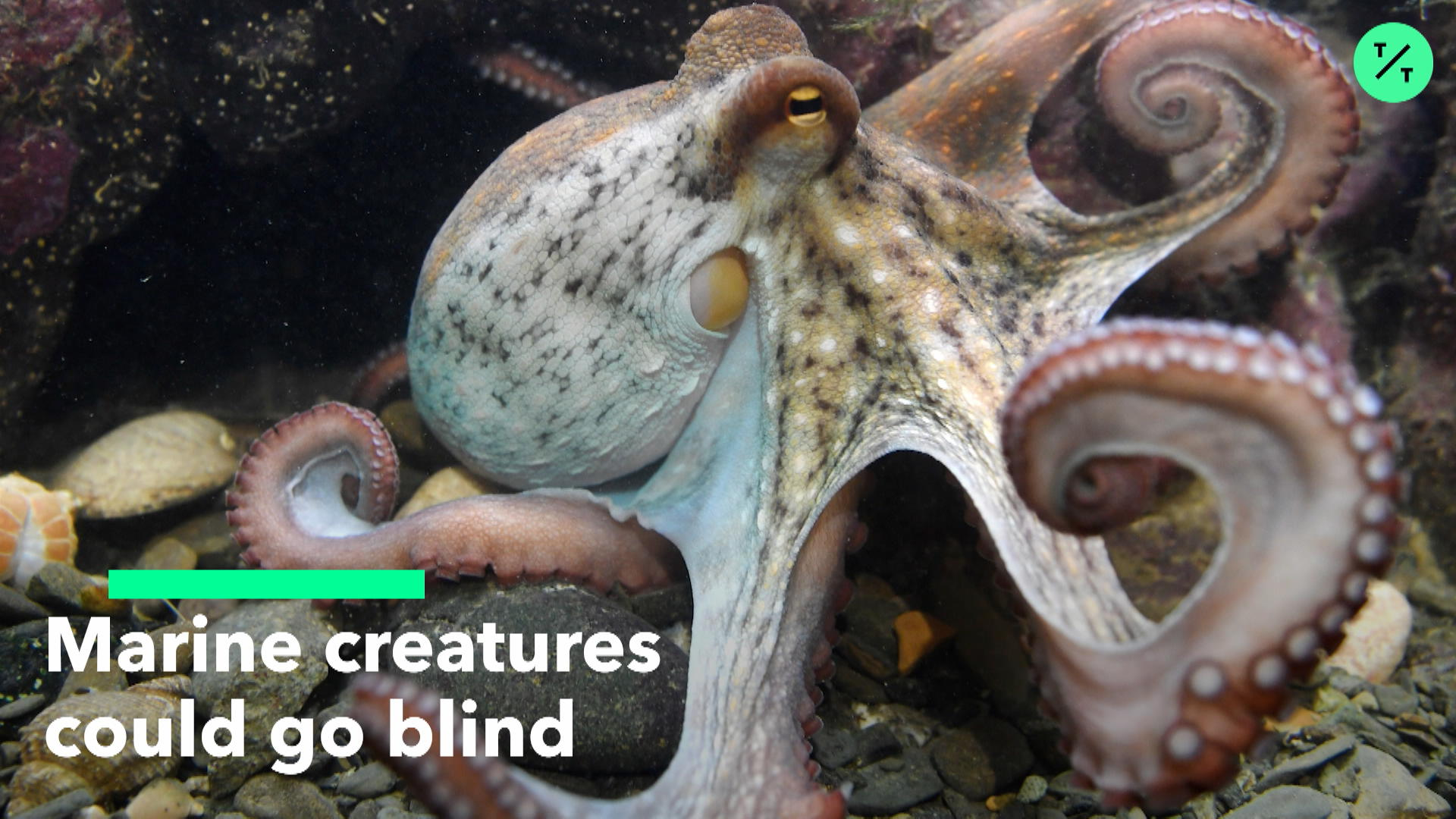 Sea Creatures Could Go Blind