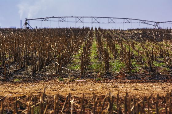 South Africa's Land-Seizure Debate: What's the State of Play?