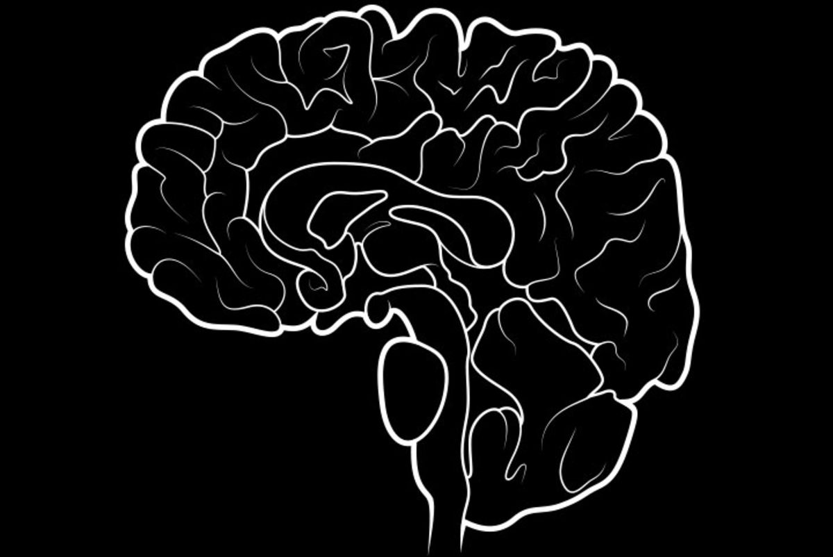 Train Your Brain for Trading (No, Really!)
