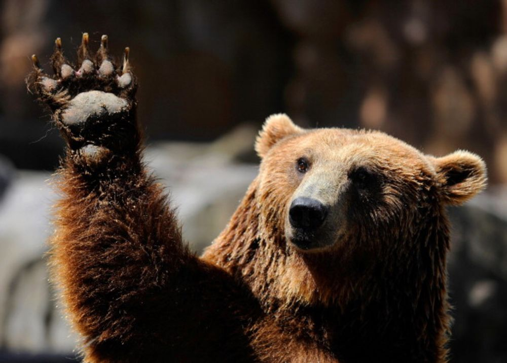 A Recession Is Coming, And Maybe a Bear Market, Too