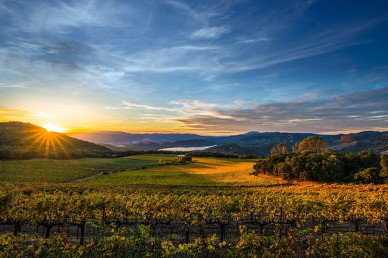 The Burning Question forCalifornia Wine Country