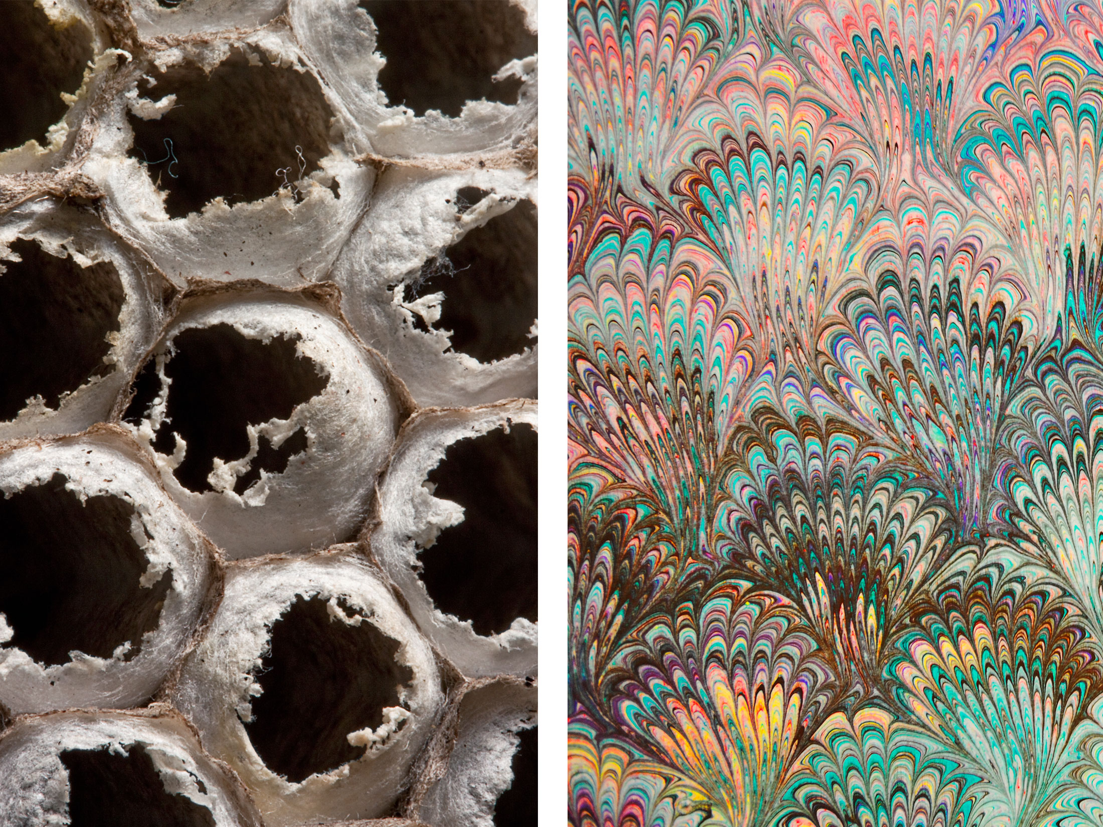 biomimicry thesis Links will take you to the pdf of the thesis in the digital collections at mcad   the application of biomimicry for innovation and concept development of a.