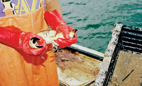 Most stone crabs will regrow their claws after they're thrown back