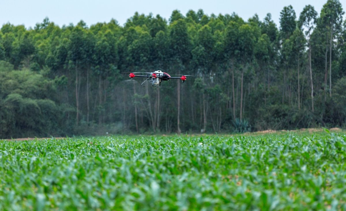 China Drone Attack On Crop Eating Monster Shows 98 Kill