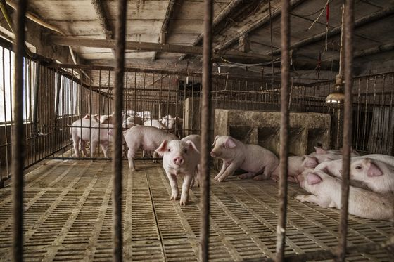 China's 20,000 New Pig Farms Won't Cool Pork Prices Just Yet