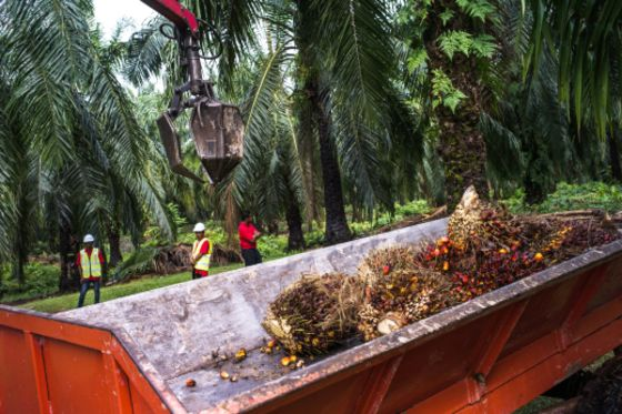 The World Has Loads of Sustainable Palm Oil... But No One Wants It