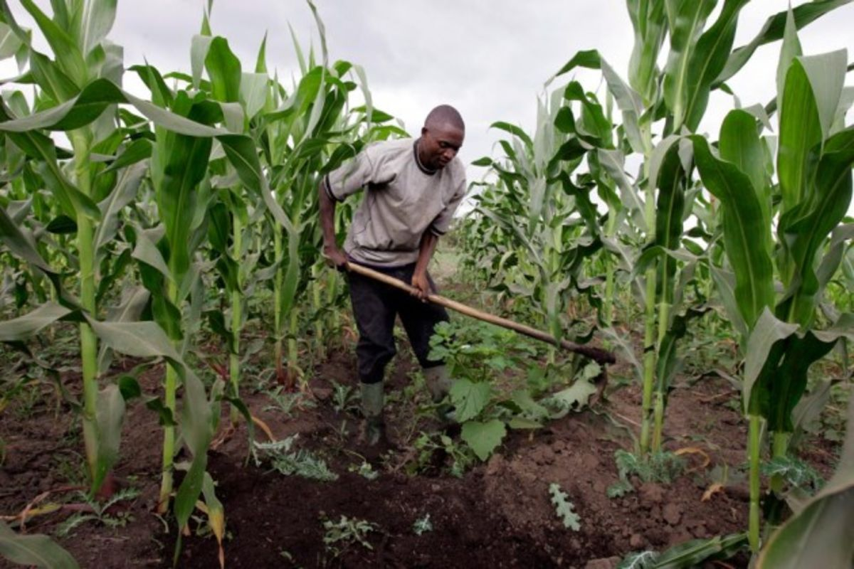 an examination of agricultural transformation in zimbabwe 85 the new harvest agrarian policies and rural transformation in southern africa dossier the future of agriculture in zimbabwe the expansion of contract.