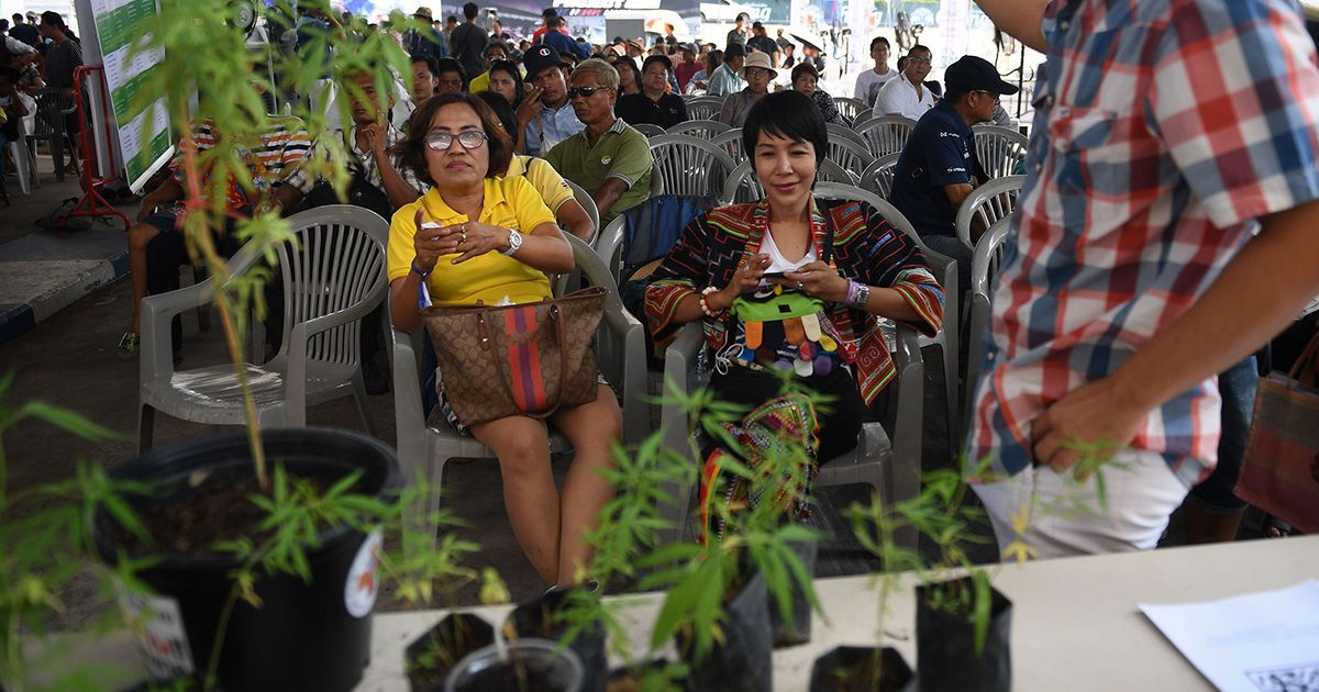 Thailand's Unlikely Embrace of Cannabis