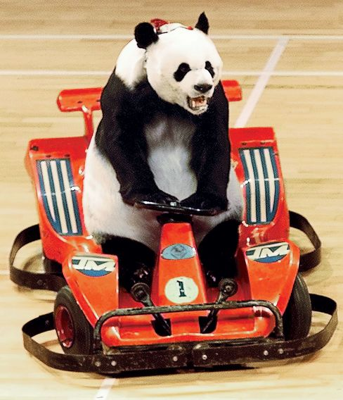 PANDA PERFORMS AT THE CHINESE ACROBATS ARTS FESTIVAL IN BEIJING.