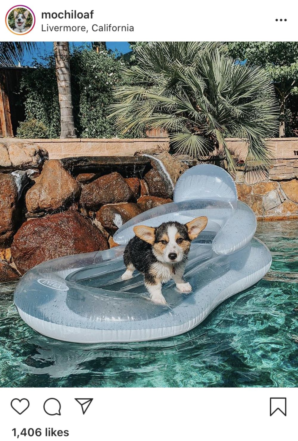 Dog Influencers Take Over Instagram After Pandemic Puppy Boom Bloomberg