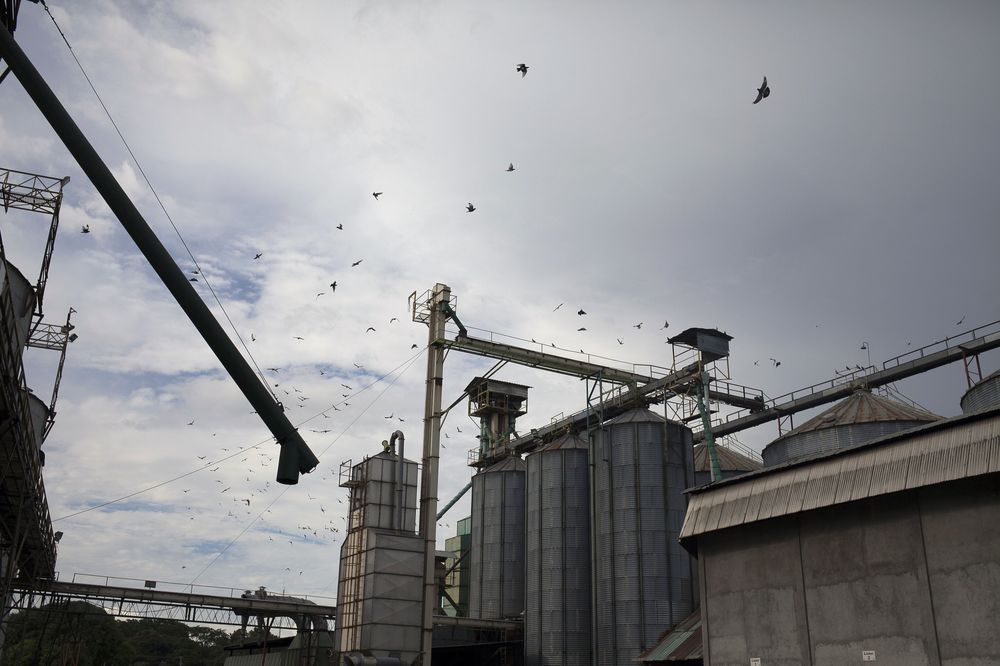 Birds fly above grain silos in the town of Acarigua, Portuguesa state, Venezuela.
