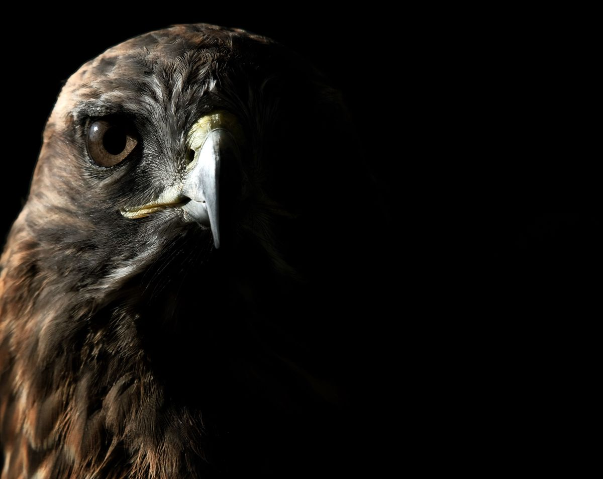 Fed Hawks Don't Have History on Their Side