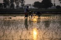 Farming in Rural Haryana as Millions of Workers That Fled India's Cities Don't Want to Return
