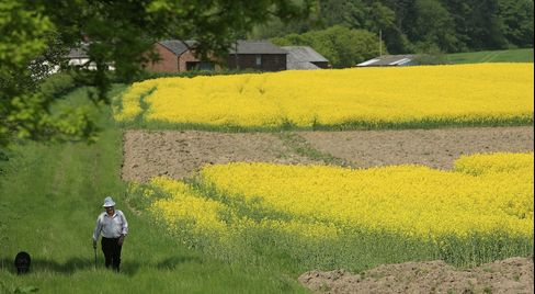Oilseed Rape Increases In Popularity As Fuel Source