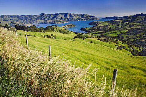 New Zealand: The Internet???s Petri Dish