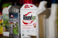 No Bayer Roundup Settlement Anytime Soon, Says Lawyer Who Won in Court