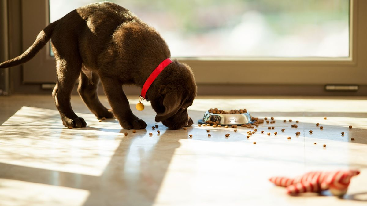 <p>Pandemic Pet Boom Boosts Results for Animal Health Companies thumbnail