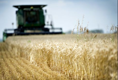 Wheat Fields Parched by Drought From U.S. to Russia