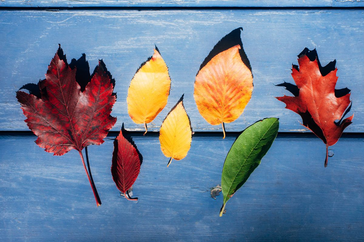 Take a Professional's Advice When Photographing Fall Foliage