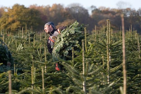 These Christmas Trees Have Frequent Flier Miles