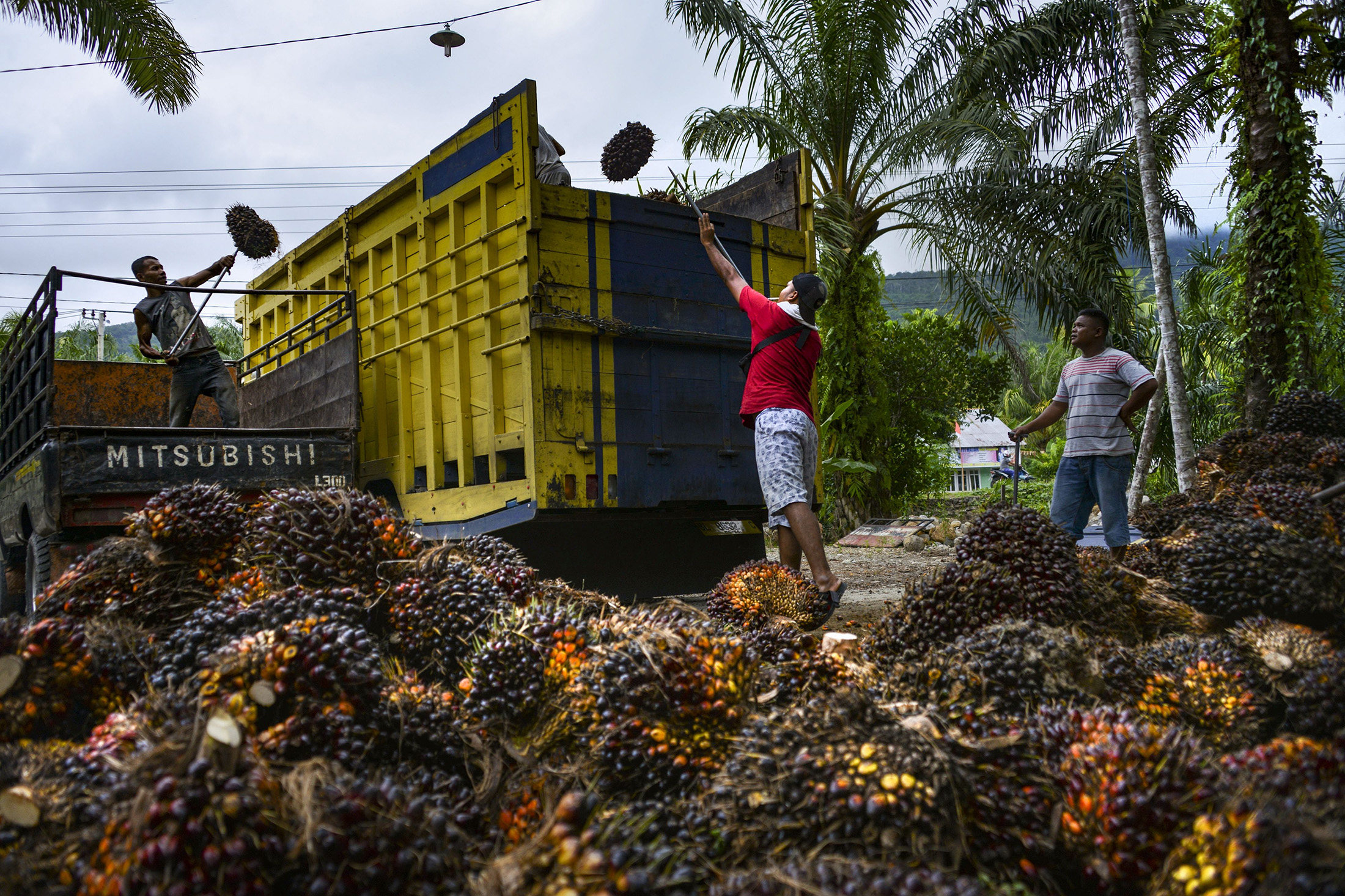 INDONESIA-EU-ENVIRONMENT-AGRICULTURE-TRADE