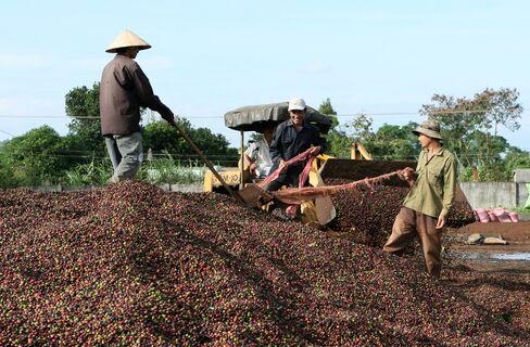 War-to-Wealth Coffee  Grower Charts Vietnam's Stalled Revolution