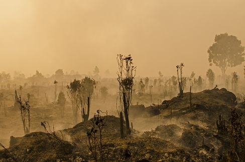 A fire-ravaged forest in Riau province, Indonesia on Aug. 28.