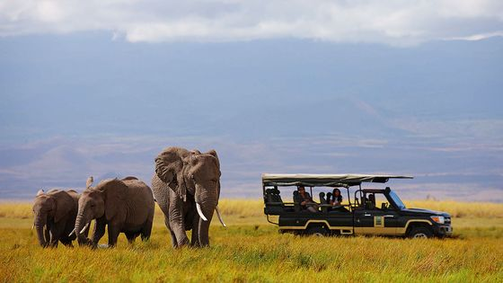 The Wrong Way to Go OnSafari, According to a Wildlife Photographer