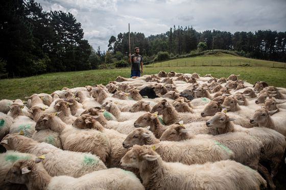 Europe Wants to Cultivatea New Generation of Sustainable Farmers