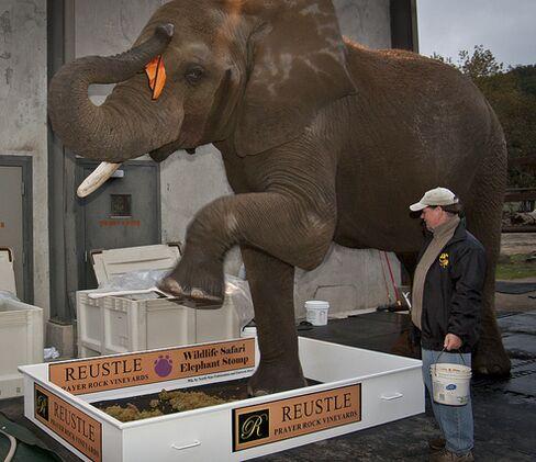 George The Elephant