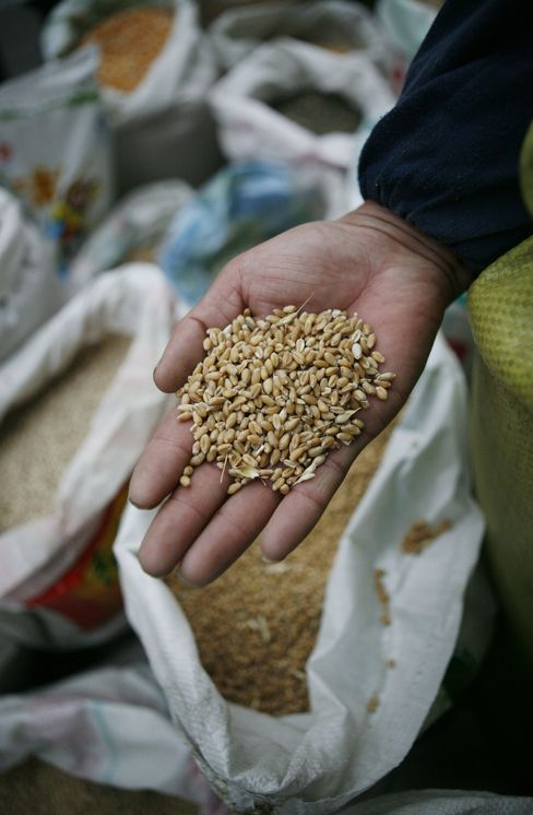 UN Sees Risk of 'Widespread' Hoarding, Wheat Gains
