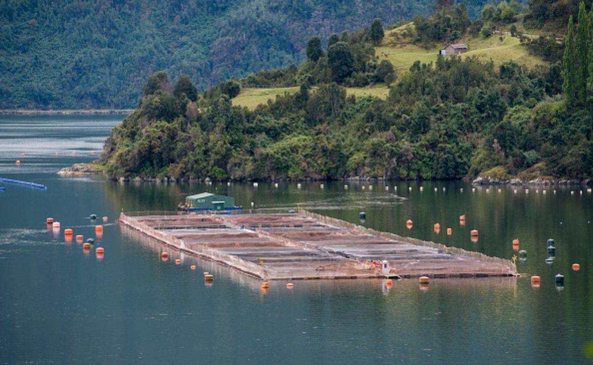 Latin America Reckons With a Fish-Farming Boom