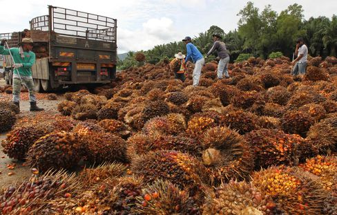 Golden Agri Seen Cheap LBO Target After Palm Oil Drop