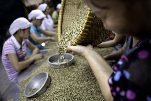 Vietnam Coffee Harvest May Drop 30% on Drought, Vicofa Says