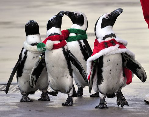 Penguins Out in Cold as Spanish Firms Freeze Holiday Spend