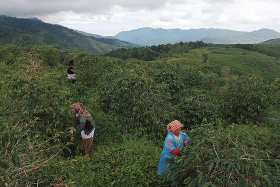 Climate Change Threat Sends Coffee Roaster on Bean Hunt