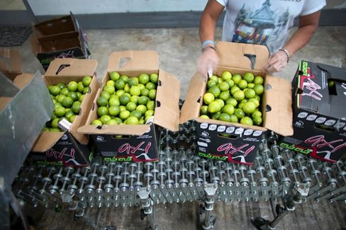 If Science Solves the Lime Crisis, Will We Accept Genetically Modified Gin and Tonics?