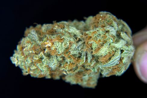 A Medical-Marijuana Bud