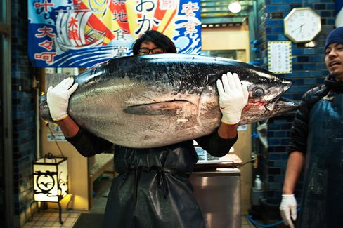 The World???s Most Expensive Fish Just Got Cheaper