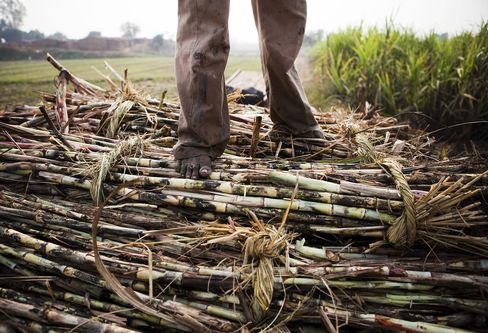Indias Sugar Production May Lag Behind Estimates